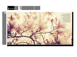 旗艦級-15X蝴蝶書-薄版
